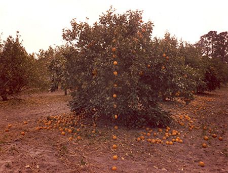 John Pfahl - Altered Landscape - Falling Oranges - Lutz Florida