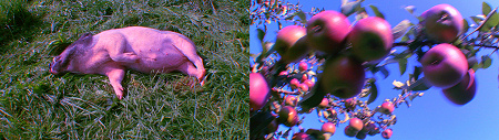 Pipilotti Rist - Pour Your Body Out - video still
