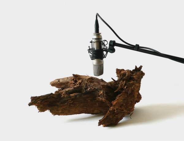 Zimoun - 25 Woodworms, Wood, Microphone, Sound System - 2009